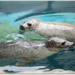 サンピアザ水族館は赤ちゃん連れでも大丈夫?魚の種類は?アクセスは?
