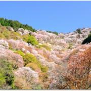 吉野山の花見の見頃は?コースのおすすめは?車で行くには?
