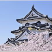 彦根城桜まつりで駐車場は停められる?交通規制は?桜開花情報は?